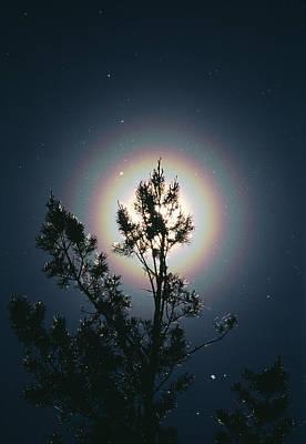 Eliptical Photograph - Pollen Corona by Pekka Parviainen