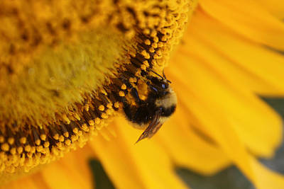 Pollen Gathering Original by Cathie Douglas