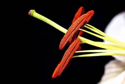 Photograph - Pollen Slippers by Lisa Knechtel