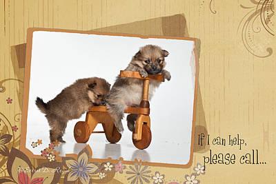 Pomeranian Photograph - Pomeranian 1 by Everet Regal