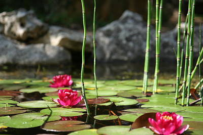 Photograph - Pond Flowers by Van Corey