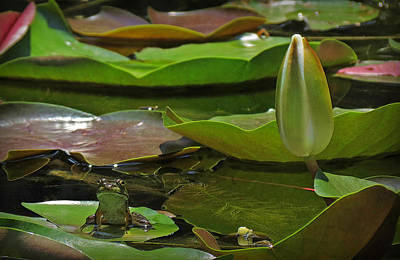 Art Print featuring the photograph Pond Frog Kingdom by Deborah Smith