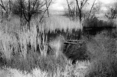 Photograph - Pond by Mark Greenberg