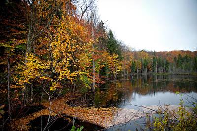 Fir Trees Photograph - Pond On Limekiln Road II by David Patterson