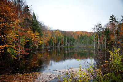 Pond On Limekiln Road In Inlet New York Art Print by David Patterson