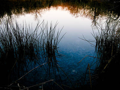 Pond Reflections Art Print by Susan Adams