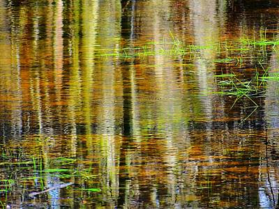 Photograph - Pond Reflections With Grass by Beth Akerman