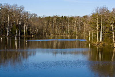 Pond Relflections Art Print by Terry Thomas