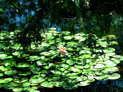 Pond With With Pond Lilly Art Print by David Killian