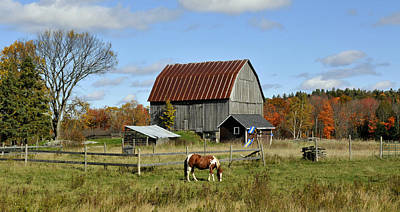 Photograph - Pony And Barn by Douglas Pike