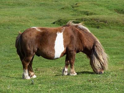 Photograph - Pony by George Leask