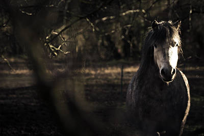 Photograph - Pony In The Brambles by Justin Albrecht