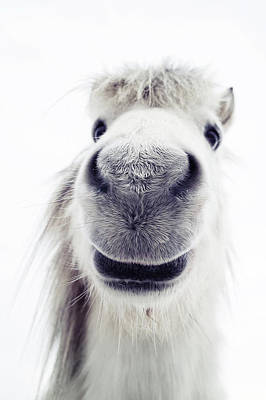 Shetland Ponies Photograph - Pony Looking Into Camera by Elke Vogelsang