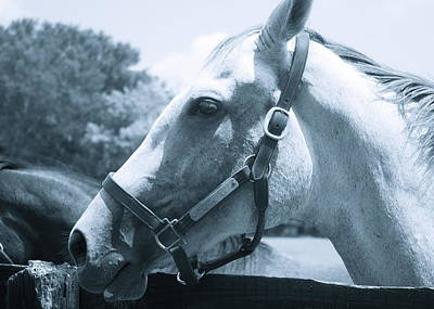 Thomas Brown Photograph - Pony Tales by Thomas Brown