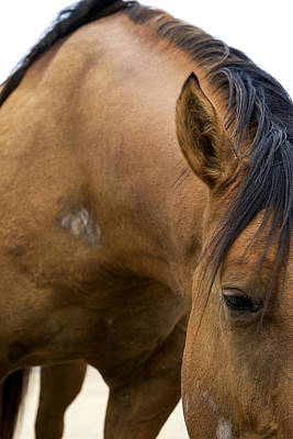 Photograph - Curious Pony by Lorraine Devon Wilke