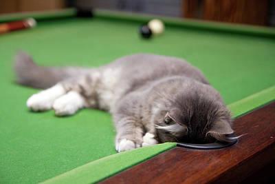 Pool Balls Photograph - Pool Kitty by (c) Chris Gin