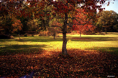 Photograph - Popcorn Tree Back Yard by Doug Duffey