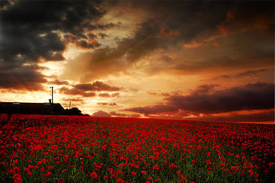 Art Print featuring the photograph Poppies At Dusk by John Chivers