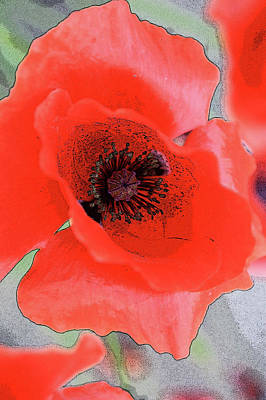 Nude Native Men Photograph - Poppies Bloom by The Artist Project