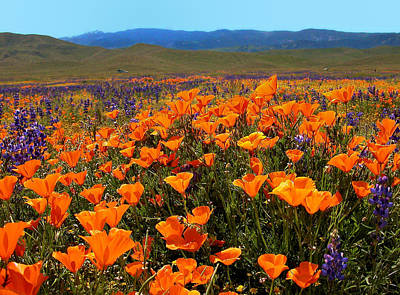 Photograph - Poppies Light Up The Landscape by Lynn Bauer