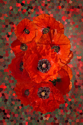 Poppies Art Print by Nigel Chaloner