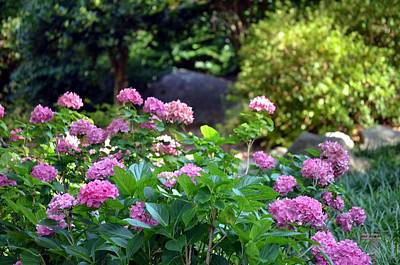 Photograph - Popping Pink Hydrangeas by Maria Urso