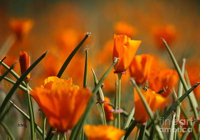 Photograph - Popping Poppies by Patrick Witz