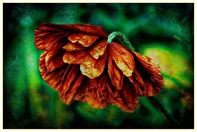 Poppy Art Art Print by Jennifer Kosminskas