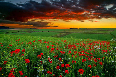 Y120817 Photograph - Poppy Field by Andrew Thomas