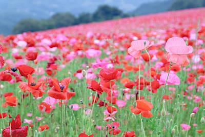 Y120907 Photograph - Poppy Field by a_Yuma