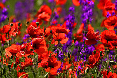 Photograph - Poppy Field by Emanuel Tanjala