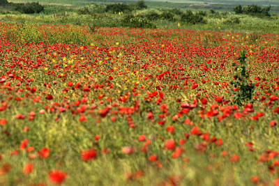 Photograph - Poppy Field II by Emanuel Tanjala