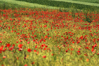 Photograph - Poppy Field IIi by Emanuel Tanjala