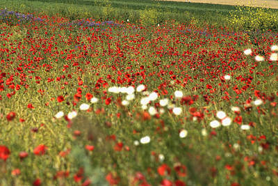 Photograph - Poppy Field V by Emanuel Tanjala