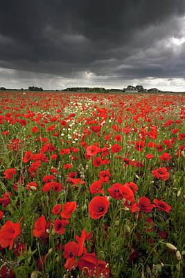 Poppy Field With Stormy Sky In Background Art Print by Chris Conway