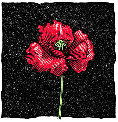 Linocut Photograph - Poppy Flower, Woodcut by Gary Hincks