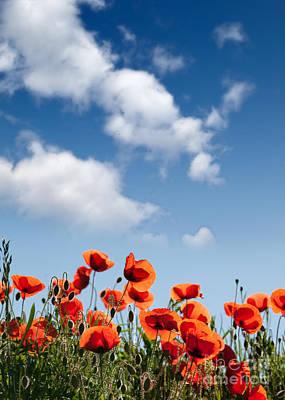 Idyllic Photograph - Poppy Flowers 04 by Nailia Schwarz