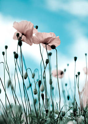 Poppy Flowers 09 Art Print by Nailia Schwarz