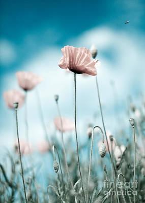 Idyllic Photograph - Poppy Flowers 10 by Nailia Schwarz