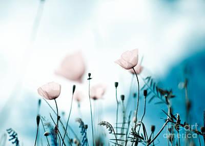 Idyllic Photograph - Poppy Flowers 11 by Nailia Schwarz