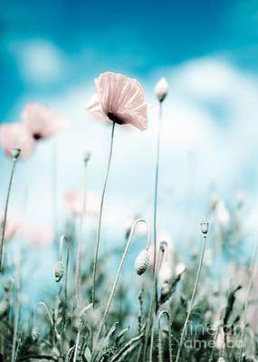 Idyllic Photograph - Poppy Flowers 13 by Nailia Schwarz