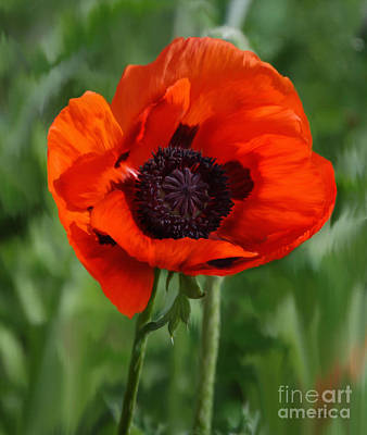 Diane Berry Painting - Poppy Garden by Diane E Berry