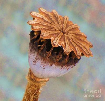Photograph - Poppy Seed Pod by Michele Penner