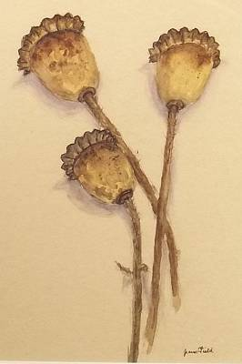 Sepia Ink Mixed Media - Poppy Seed Pods by Jean Field
