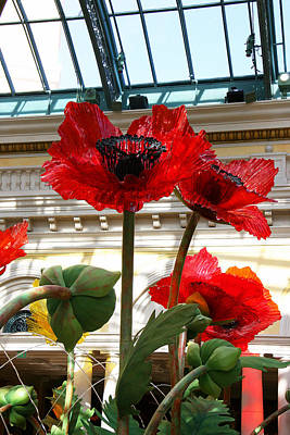 Photograph - Poppys At Bellagio by Sharon I Williams