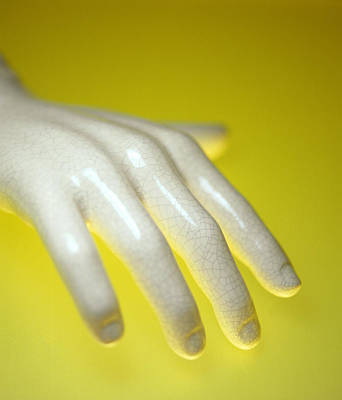 Stiff Photograph - Porcelain Hand by Lawrence Lawry