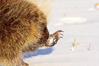 Porcupine Digital Art - Porcupine In Winter by Mark Duffy