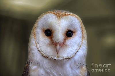 Winter Animals - Portrait of a Barn Owl by Rob Hawkins