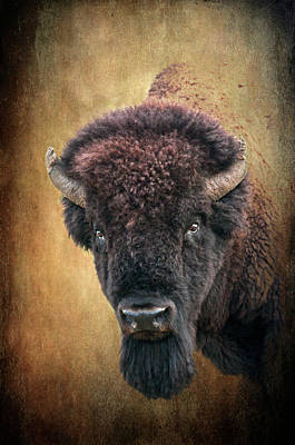 Portrait Of A Buffalo Art Print by Tamyra Ayles