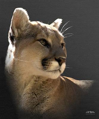 Portrait Of A Cat Original